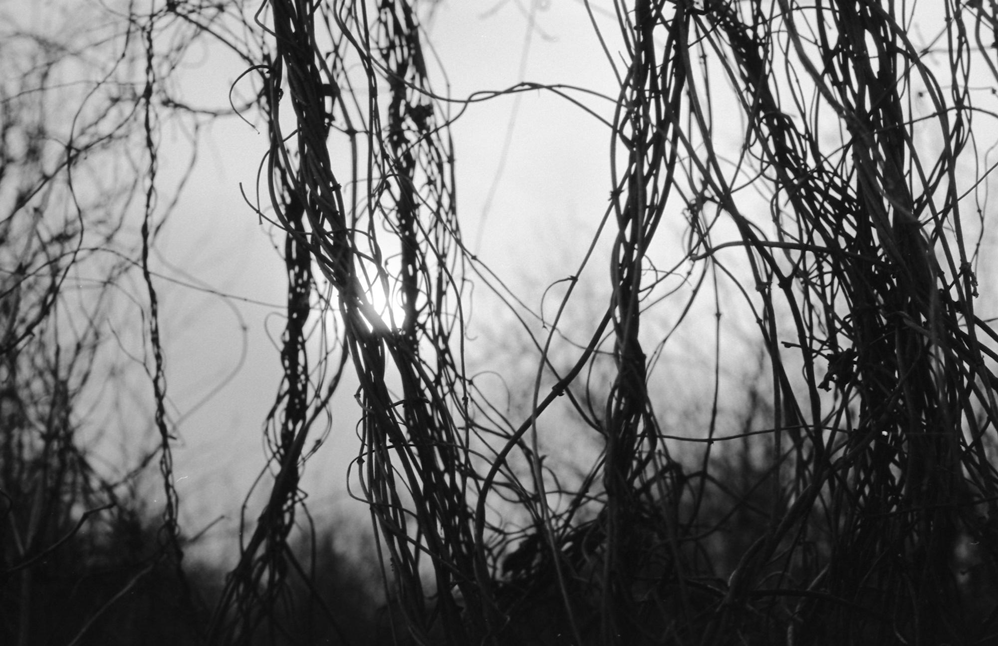 Little Woods - Hirschau