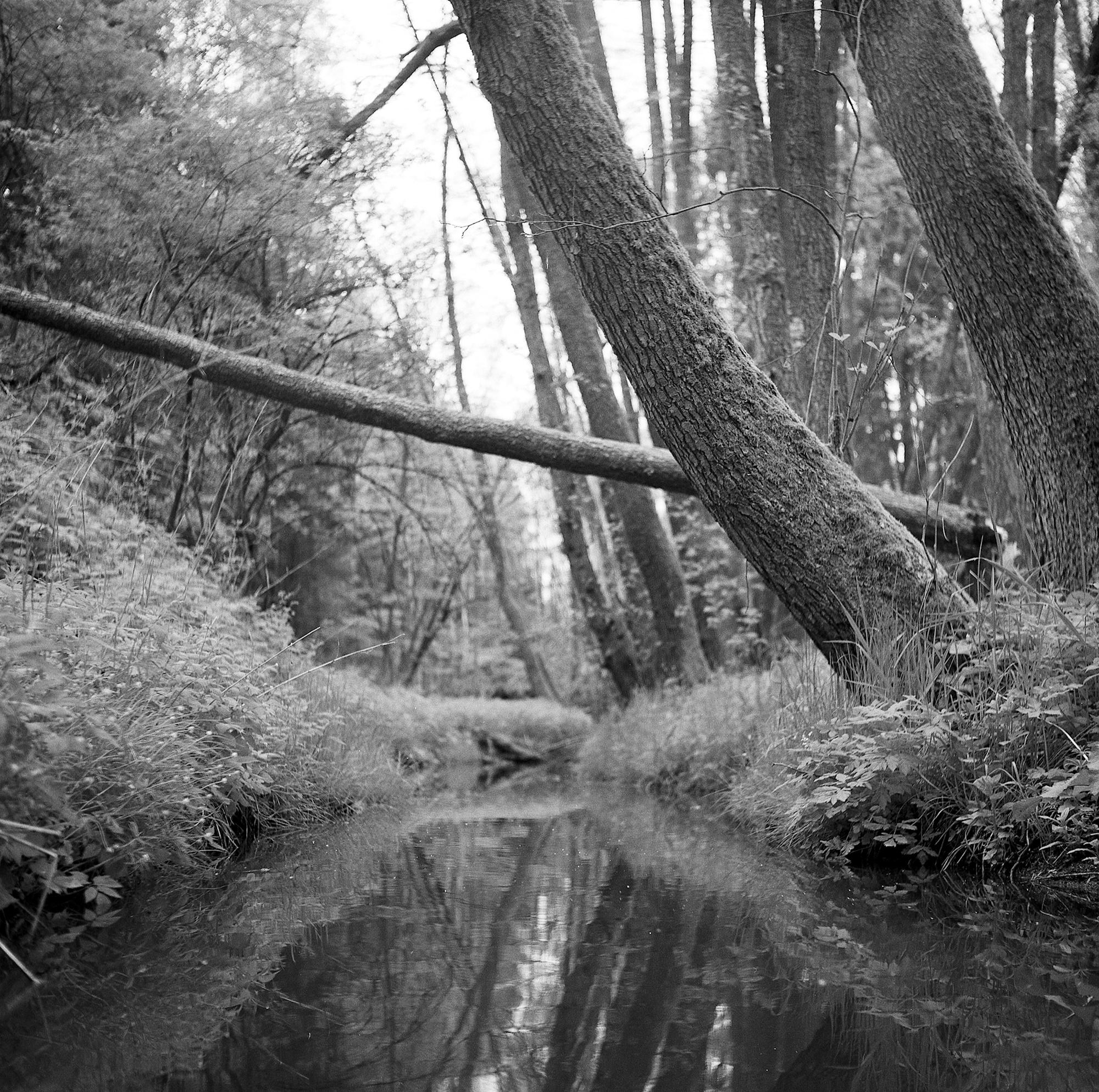 Little Lakes - Hirschau